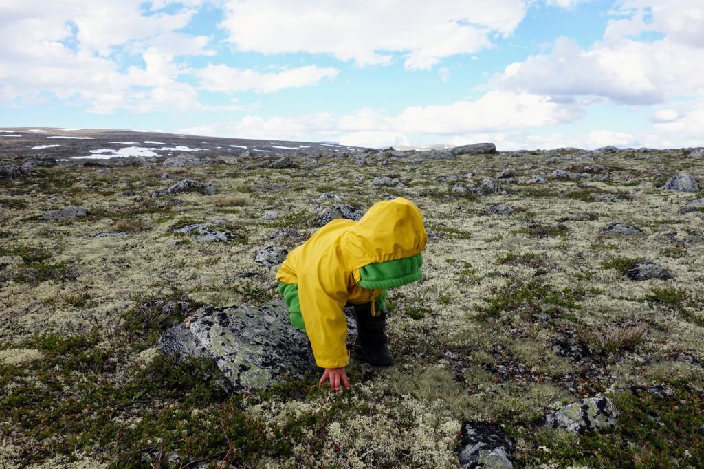 Kind erforscht die Tundra
